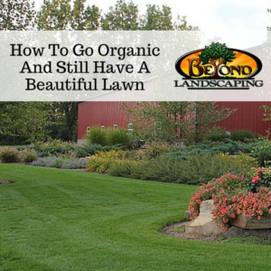 How To Go Organic And Still Have A Beautiful Lawn