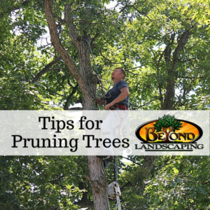 Tips for Pruning Trees